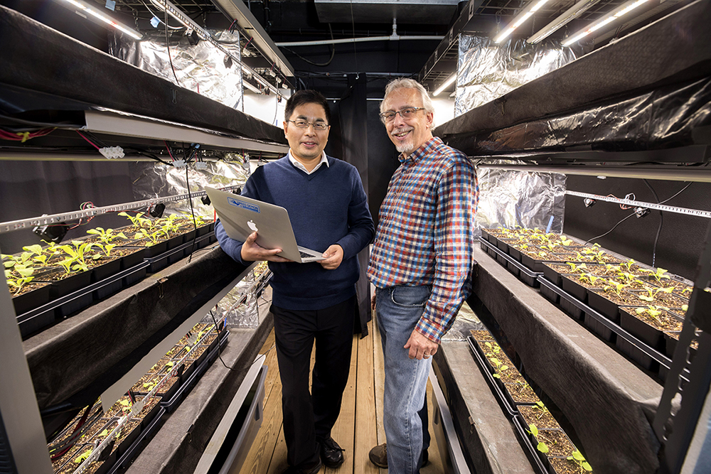 UGA faculty members WenZhan Song and Marc van Iersel in greenhouse